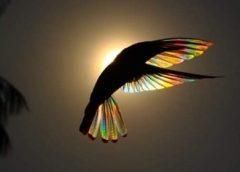 colibri maravilloso bajo el sol